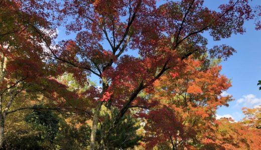 【保存版】京都グルメマップをまとめておく